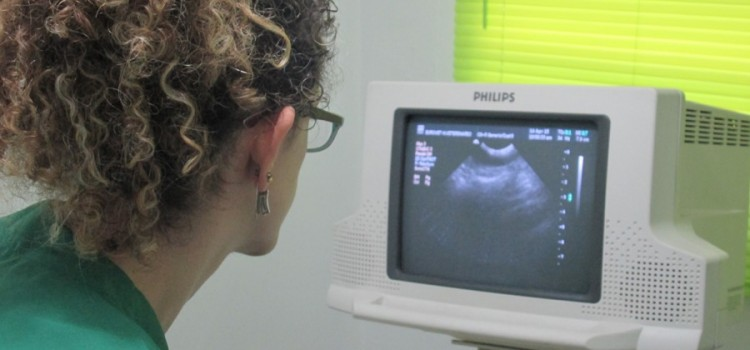 EuroVet, servicios de radiología y ecografía veterinarias en Medellín