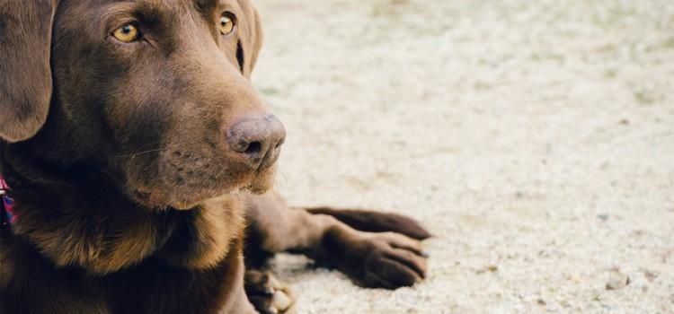 El COVID-19 no se transmite a través de perros y gatos