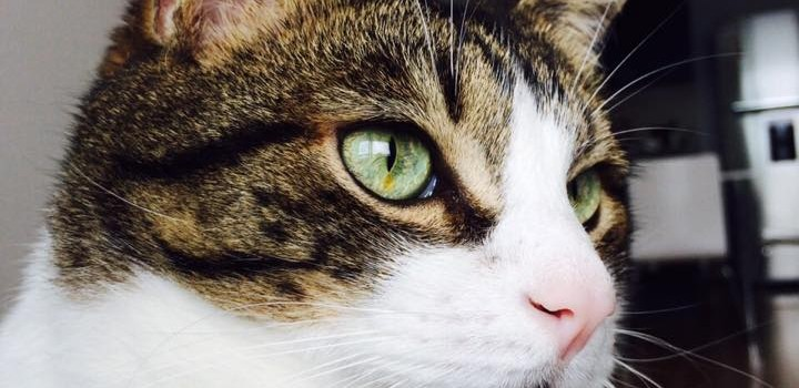 Orión, el gato, está recuperado y sano