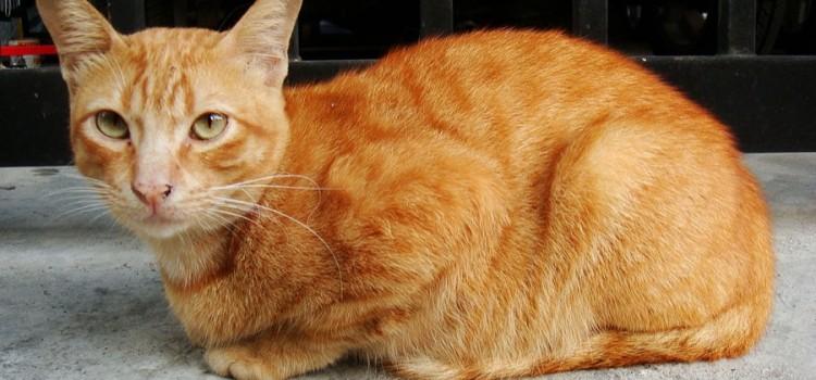 Los gatos, mascotas sorprendentes