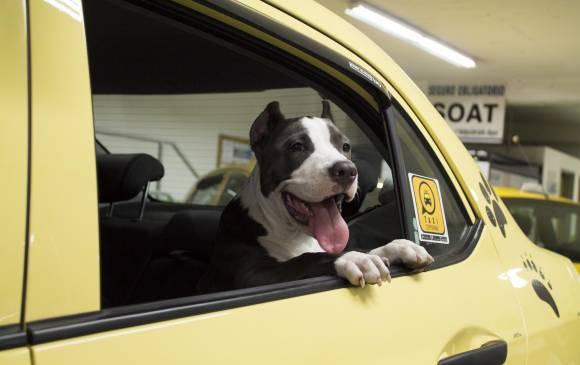 Foto Mascota Medellin Taxi