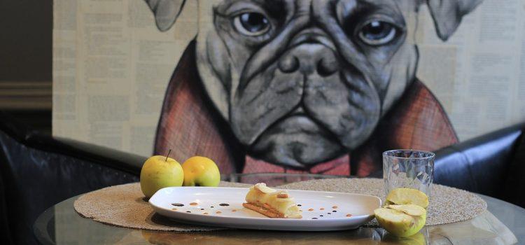 Pet friendly: una tendencia que crece en restaurantes y centros comerciales de Medellín