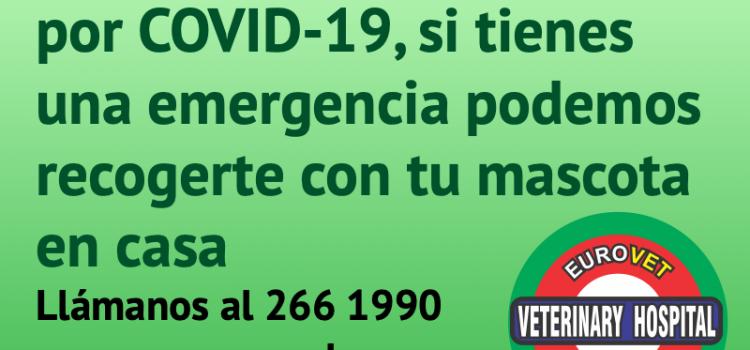 Durante el COVID-19, si la mascota tiene una emergencia podemos recogerla en su casa
